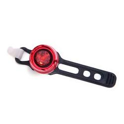 Bonin luce anteriore  JY small